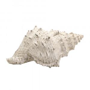 MARE ΔΙΑΚΟΣΜΗΤΙΚΟ ΚΟΧΥΛΙ POLYRESIN NATURAL 19,5x12xY10cm