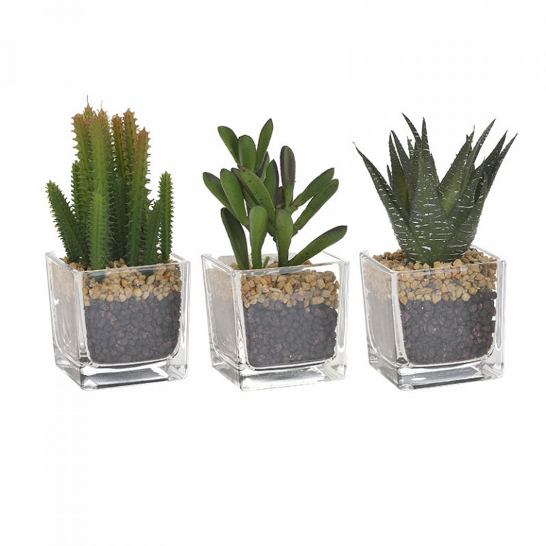 Φυτό Σε Γλάστρα 3 Σχέδια